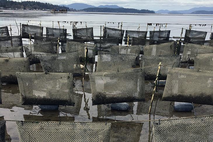 oyster-flip-bags.jpg