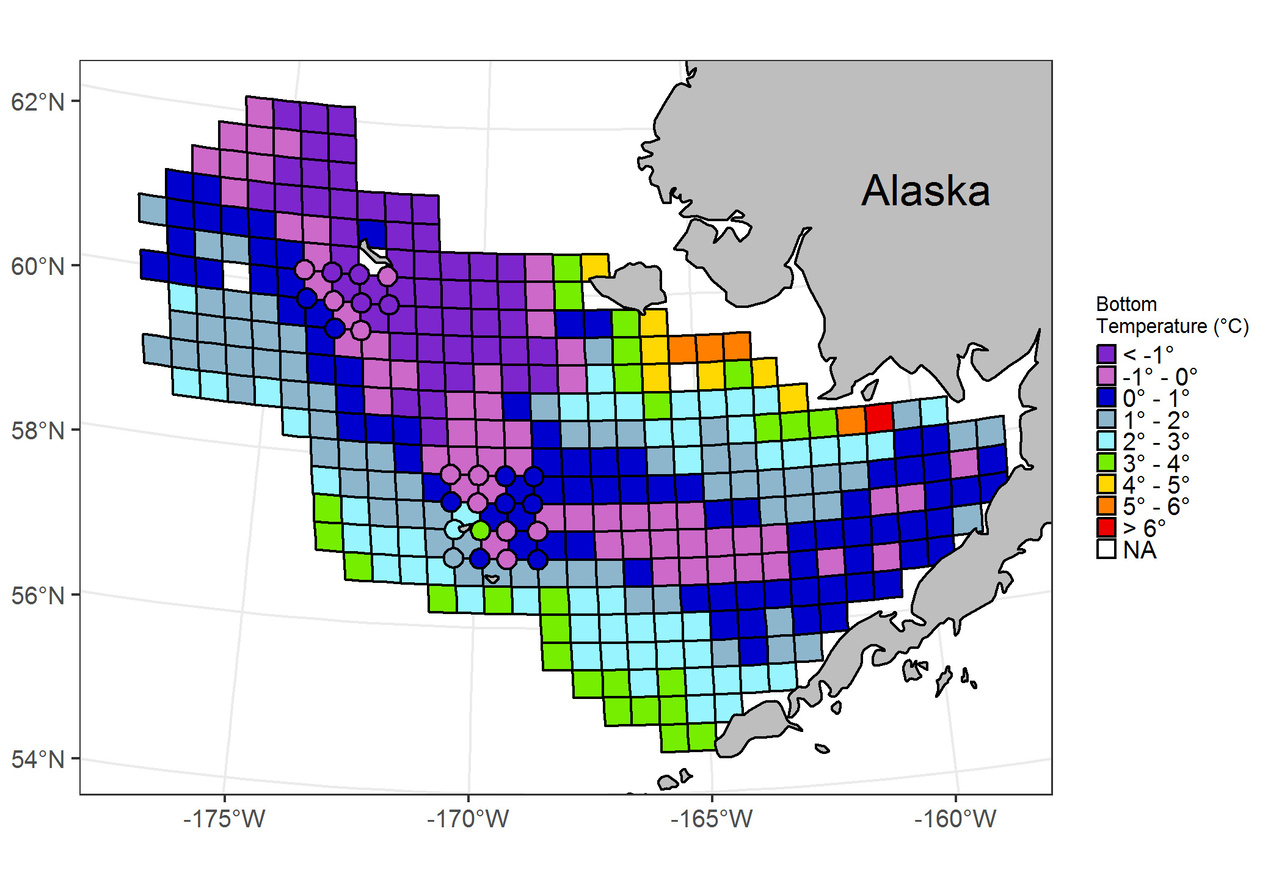 During the winter of 2011/2012 water temperatures on the bottom were colder than normal and the Gulf of Andyr and Bering Sea saw broad sea ice coverage.  As expected, when scientists returned to the Bering Sea in the summer of 2012 to conduct their annual survey, they saw an extensive cold pool.