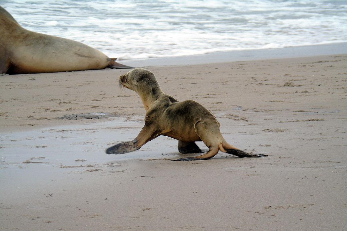 california-sea-lions.jpg