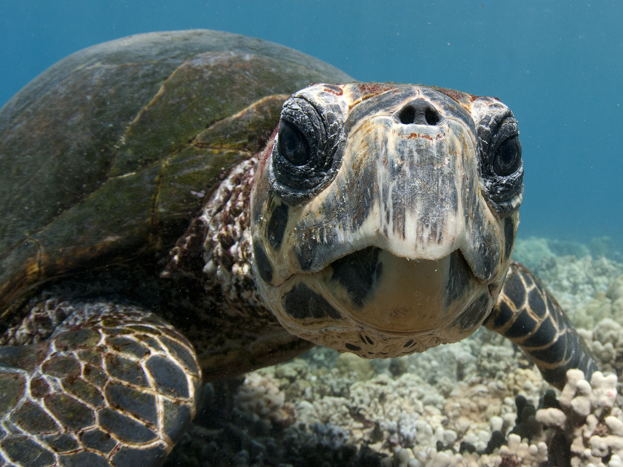 3035x2276-Hawksbill face-Don McLeish.jpg