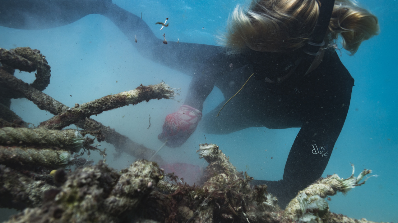 Diver cuts nets underwater