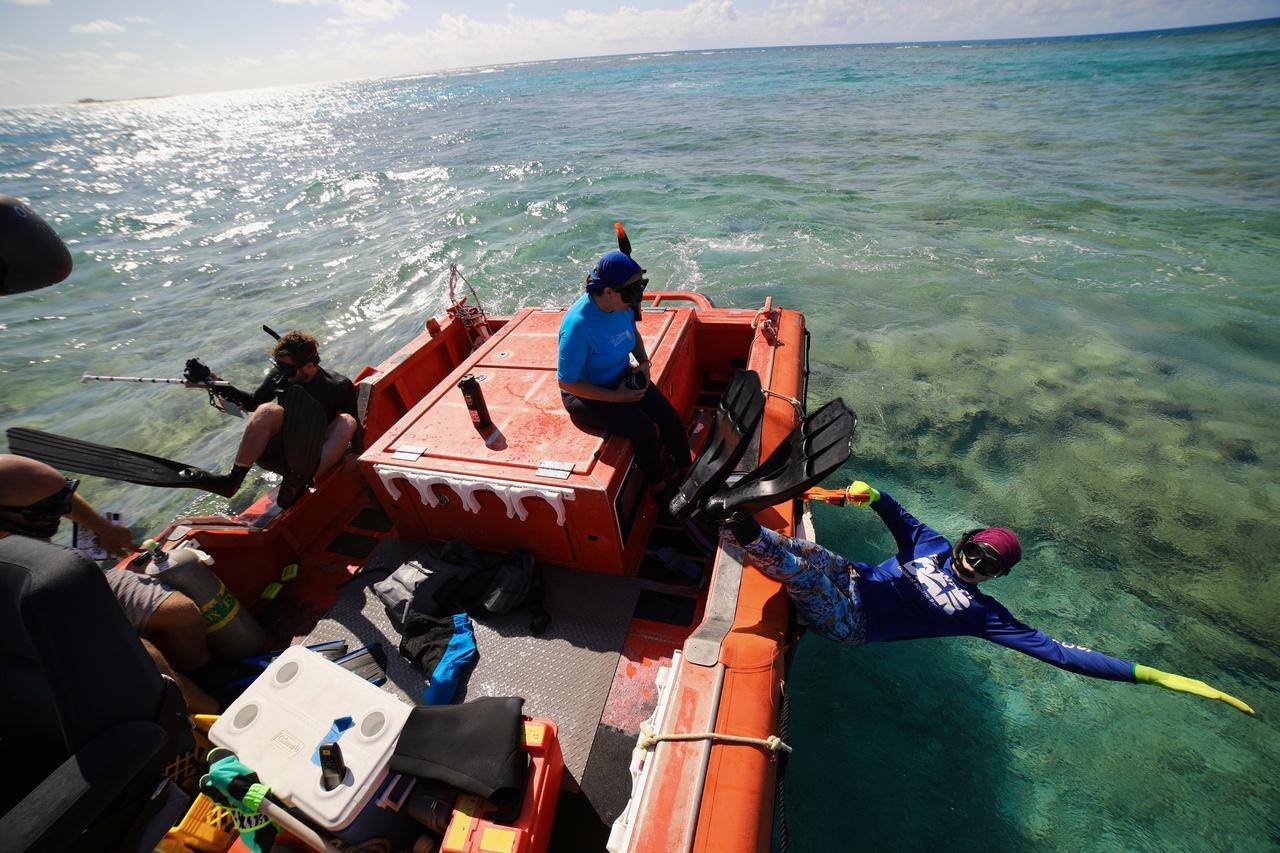 Team Members Noah Pomeroy, Kerry Reardon, and Jenni Samson jump in to conduct a snorkel bleaching survey at Kānemilohaʻi/Lalo/Mokupāpapa (also known as French Frigate Shoals). <i>Photo: NOAA Fisheries/James Morioka. </i>