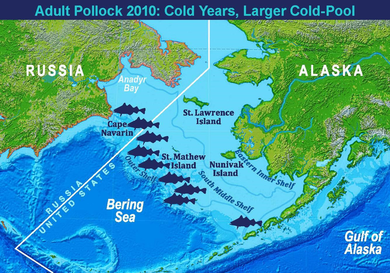 Map showing 2010 approximate pollock distribution and representation of a cold year with a larger cold-pool.