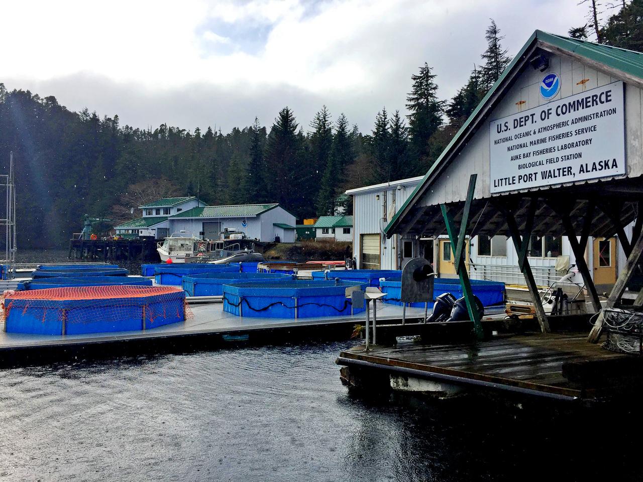 Little Port Walter Field Station, Alaska.