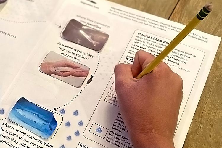 Close-up of a student designing a fish habitat using patterns.