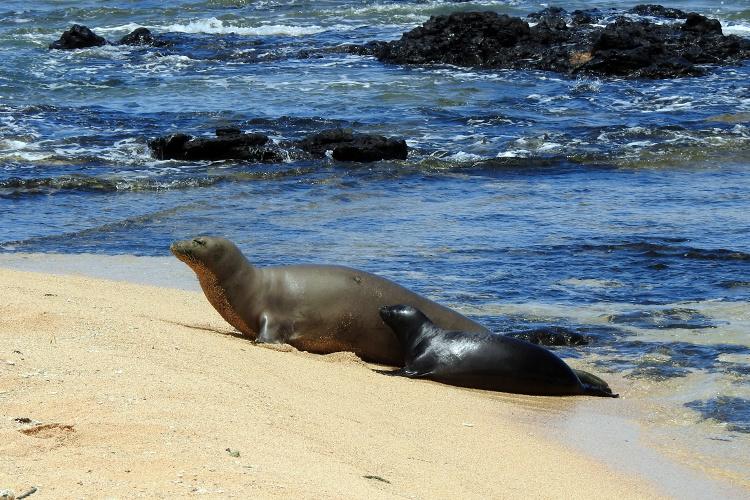 Pohaku and pup on a beach in Kauai.