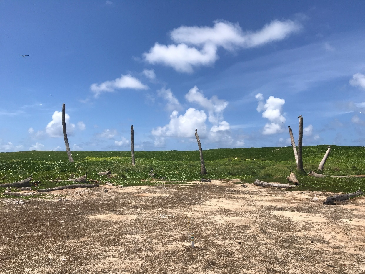 Laysan in 2018 showing native vegation outplanting efforts.