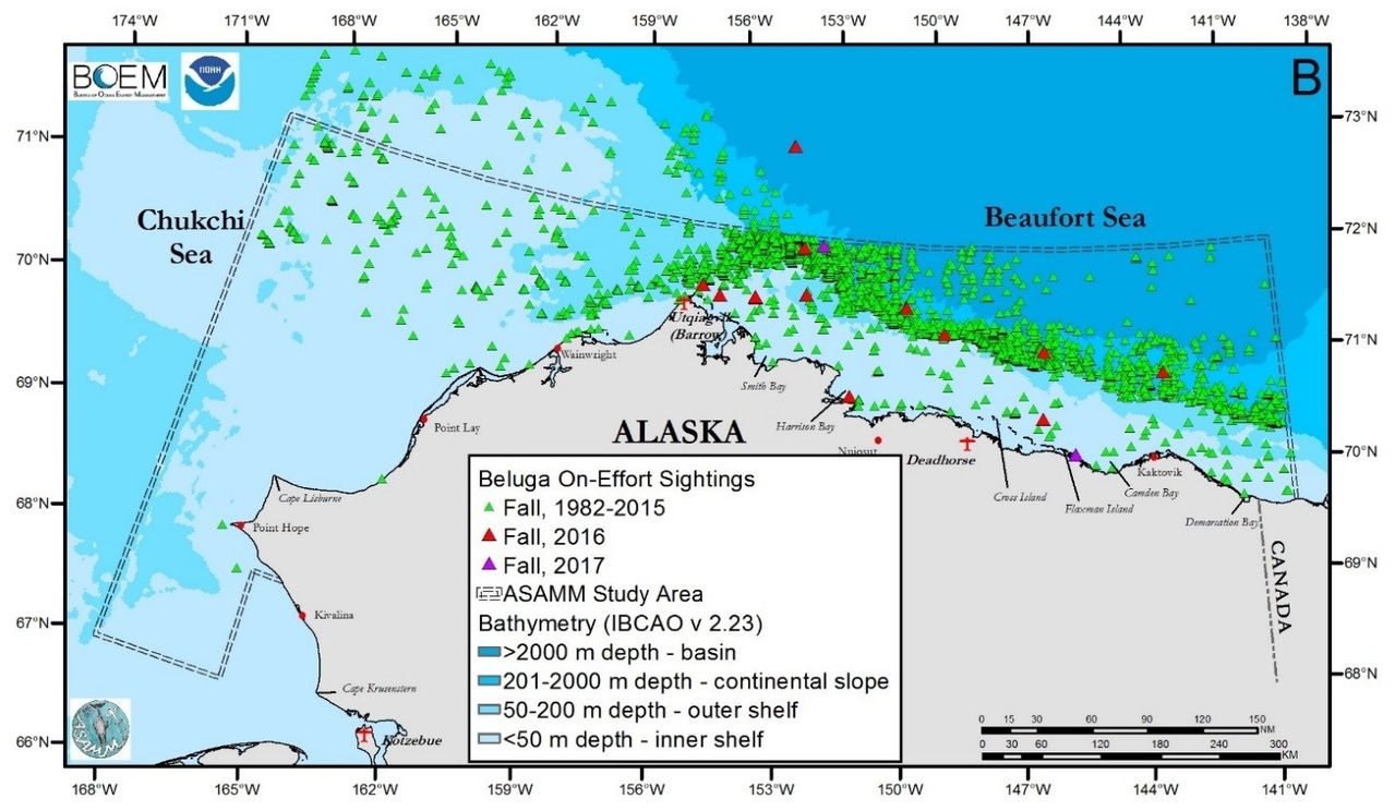 ASAMM Marine Mammal Survey Graphic