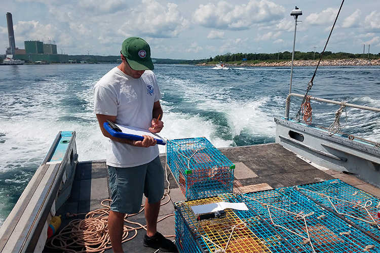 researcher working with lobster trap