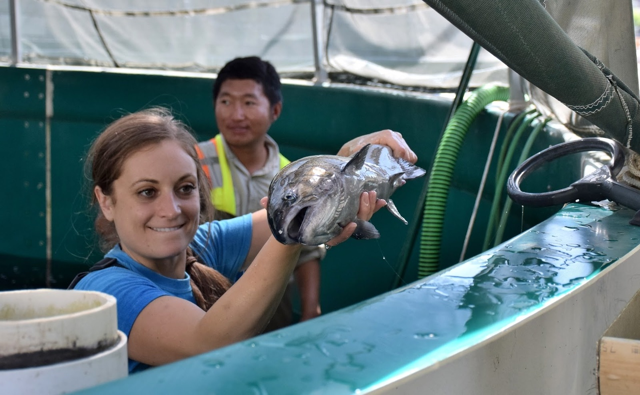 NOAA Fisheries employees helping out at the Salmon Conservation and Research Facility