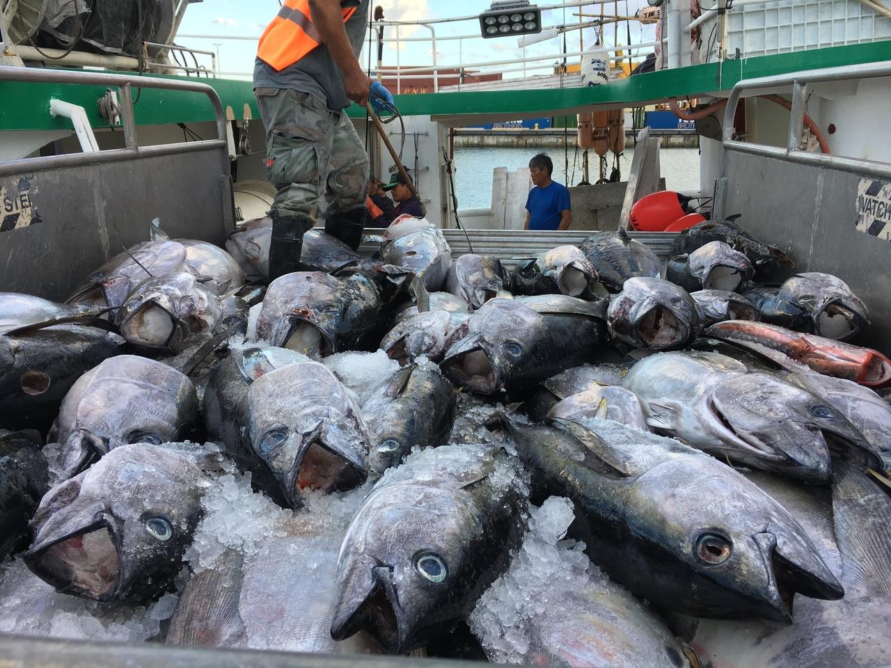 Fishermen unload a catch of ahi (tuna) from a longline fishing vessel at Pier 38 in Honolulu, Hawaii