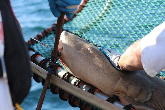 shark_cruise_44.jpg