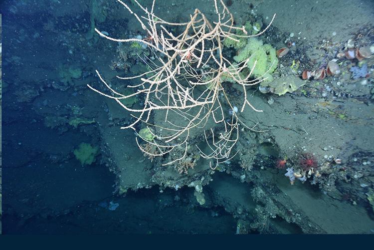bamboo-coral-2.jpg