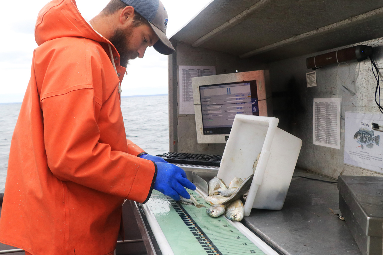 Measuring individual fish of a species