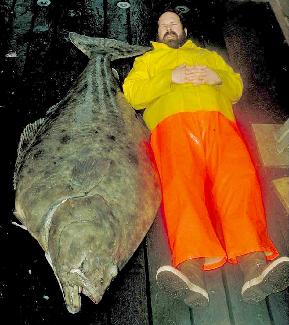 An Alaska FisheriesScience Center Researcher next to an Alaskan halibut.