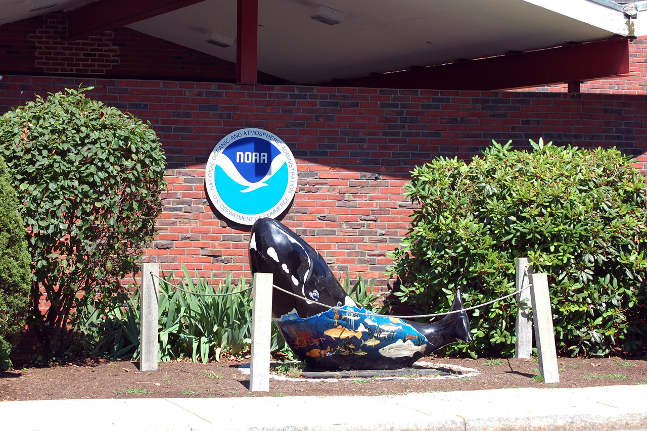 """""""Whale Trail"""" whale statue in front of aquarium"""