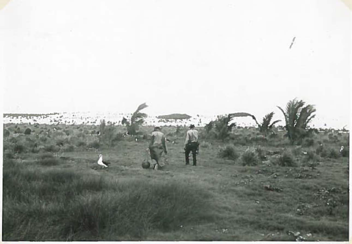 Historic photo Laysan from 1961
