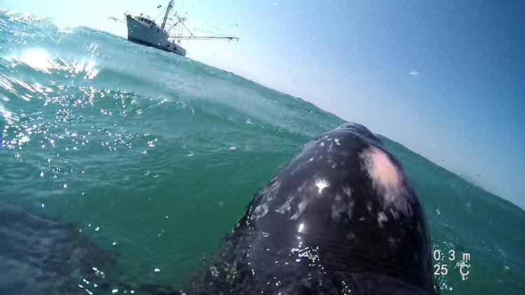 turtle-view-trawler.jpg