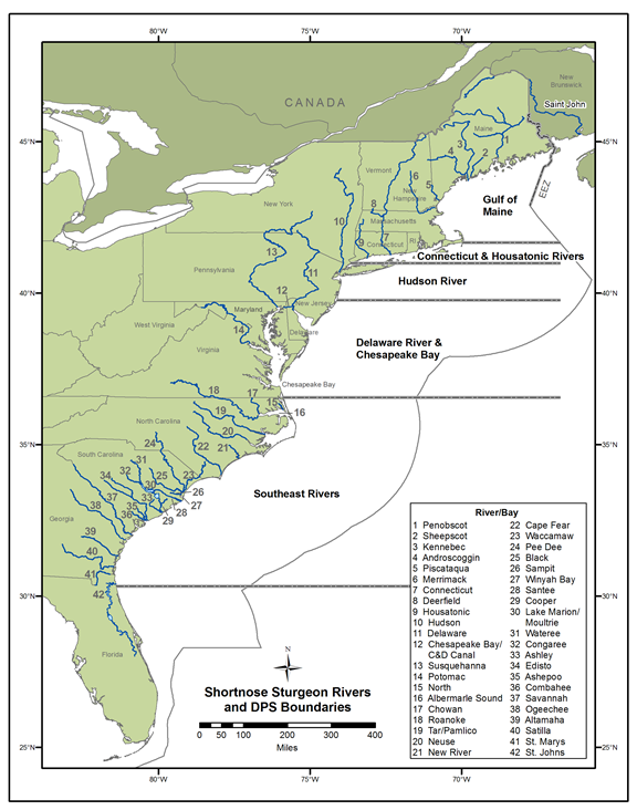 Map of rivers where shortnose sturgeon are found and DPS boundaries.