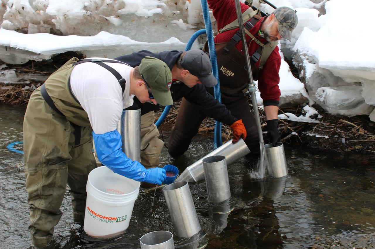 planting-salmon-eggs-maine.jpg