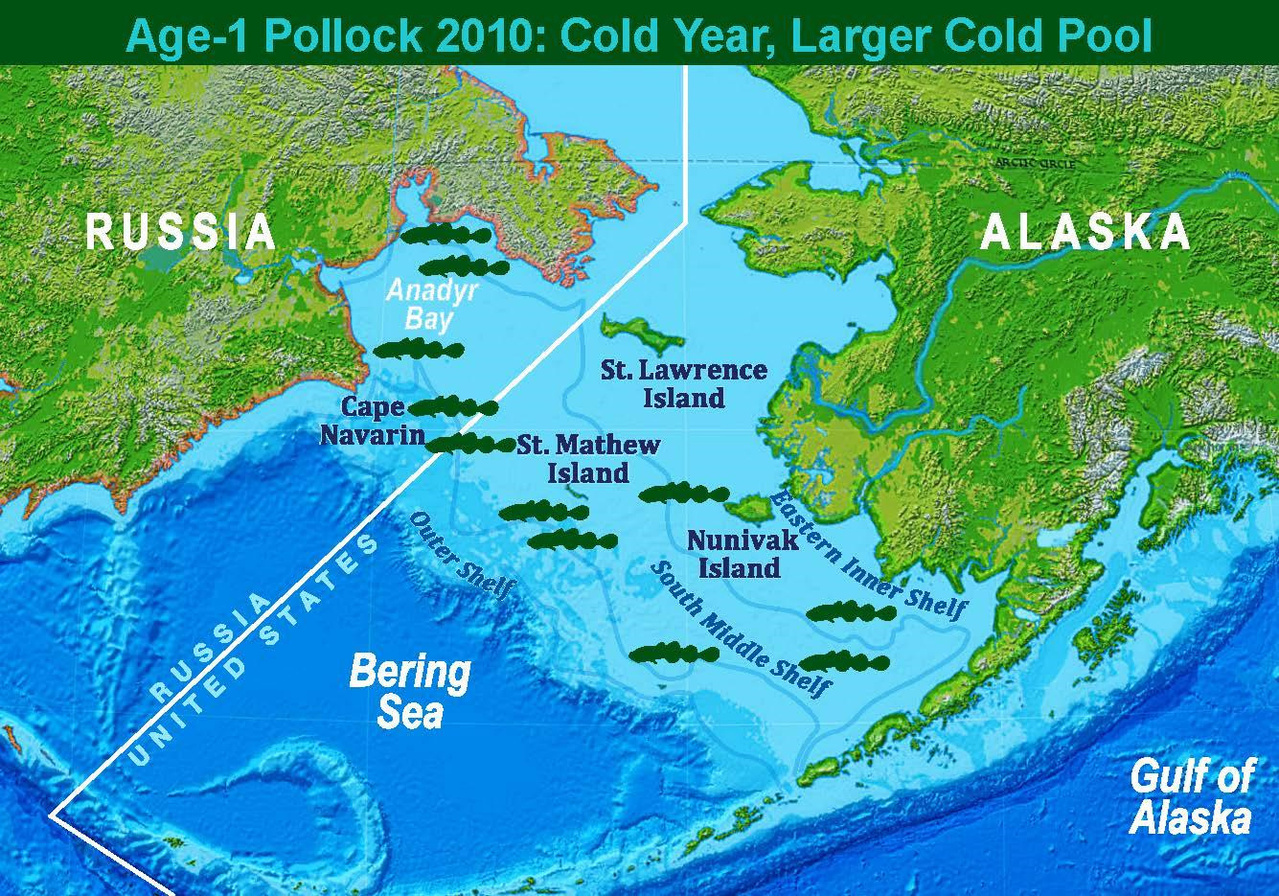 Map showing 2010 approximate age-1 pollock distribution and representation of a cold year with a larger cold-pool.