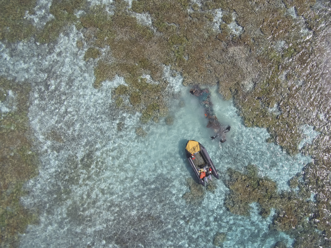 Divers remove a large net from the reef at Pearl and Hermes Atoll