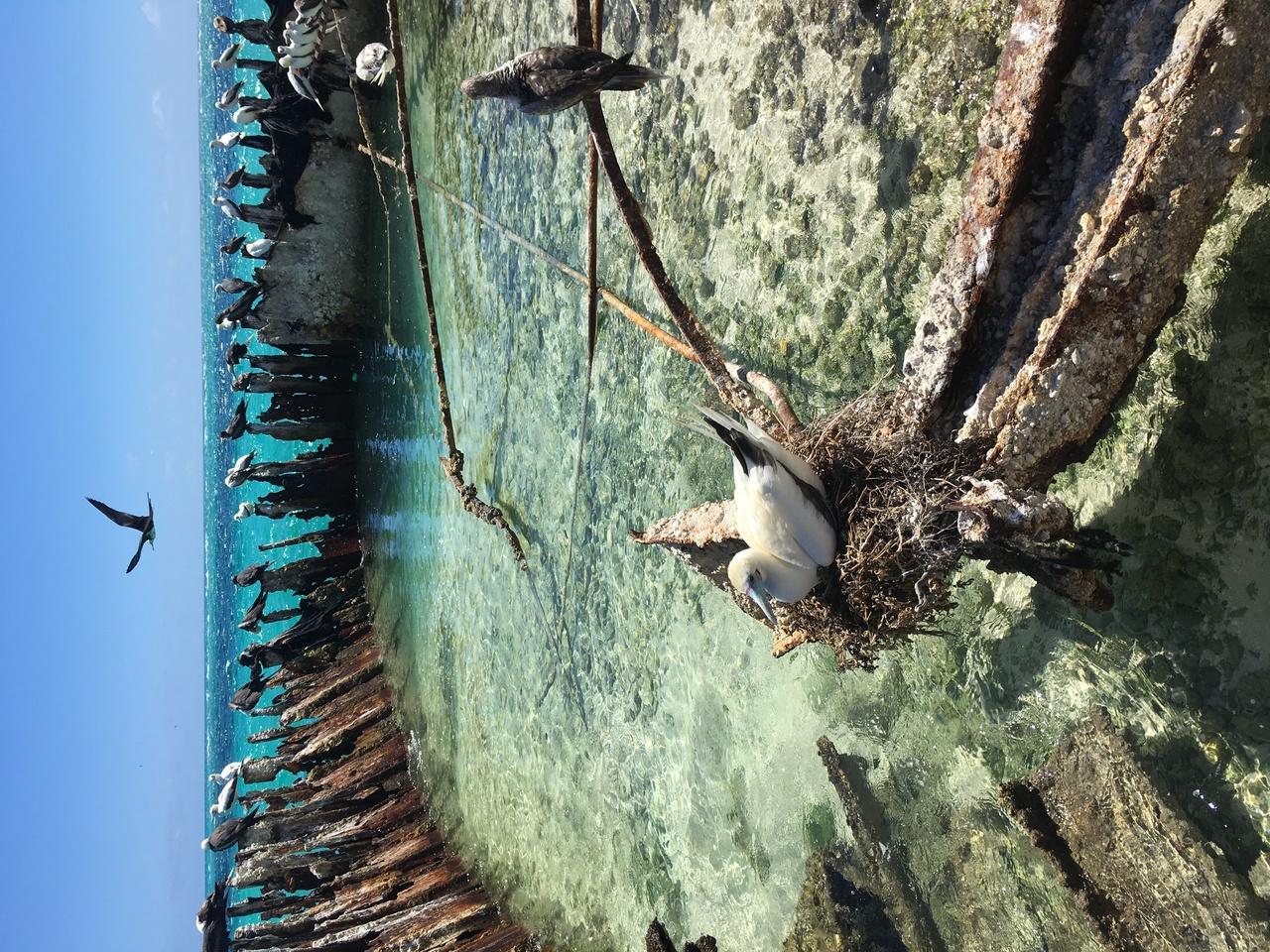 Birds at Tern Island.