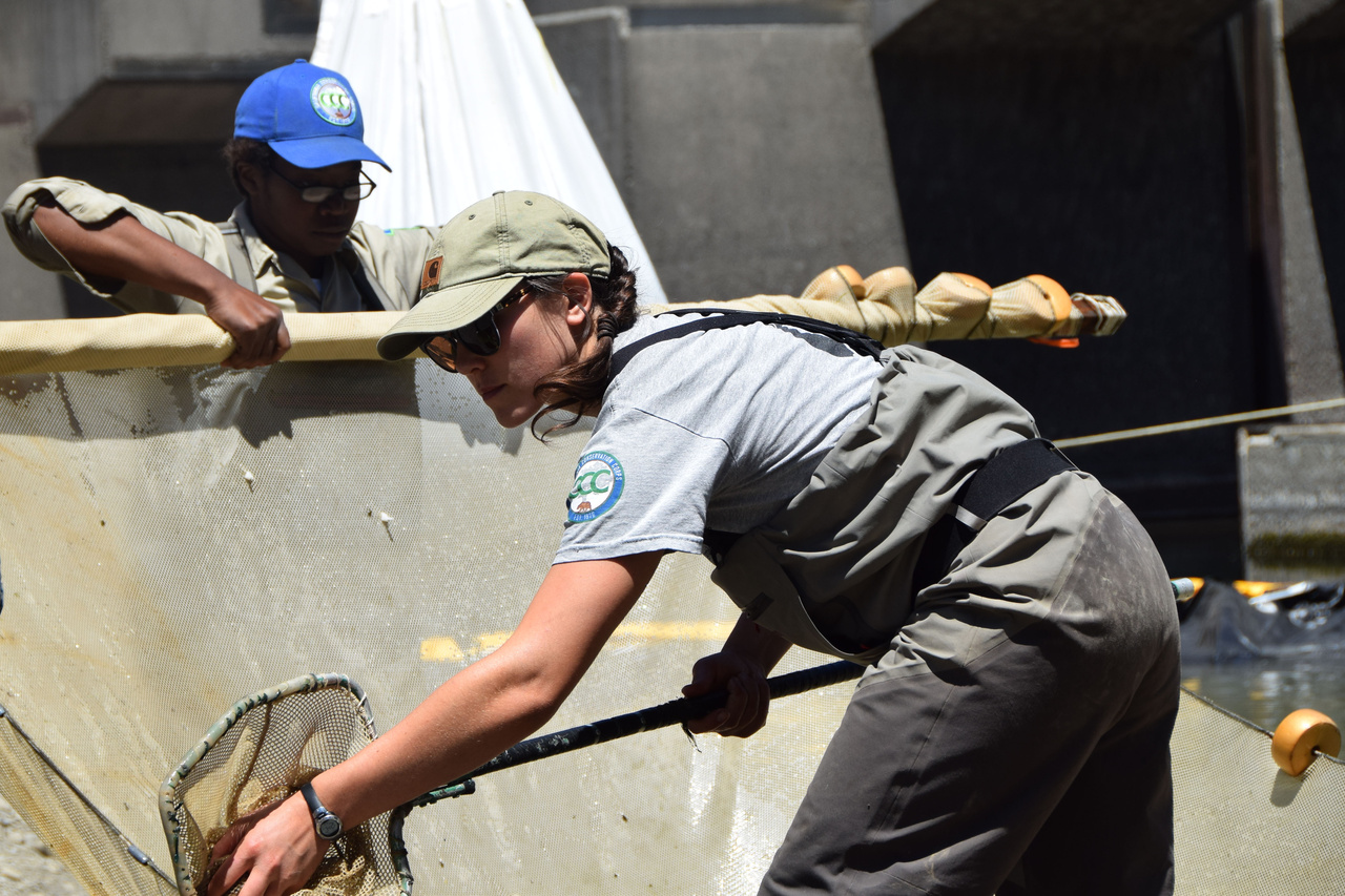 Fortuna-Veteran-Chantel-Moore-removing-fish-from-outlet-pool-prior-to-Benbow-Dam-Removal-cropped.jpg
