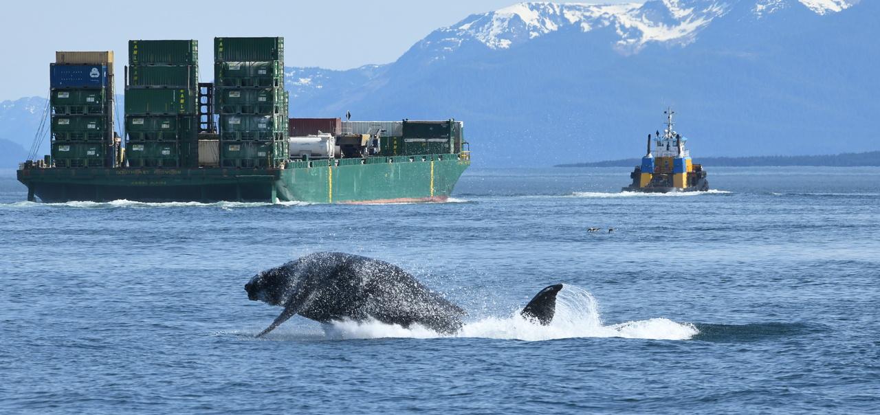 Flame_Juneau-Summer-Whale-Survey_2020_NMFS-JRM-20180517-1-065c.JPG
