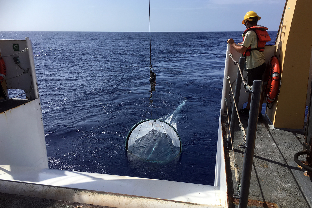 Scientists conduct day and night bongo net surveys at various depths from 200 to 500 meters from the NOAA Ship Sette.