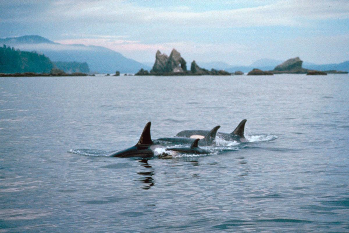 Olympic National Marine Sanctuary