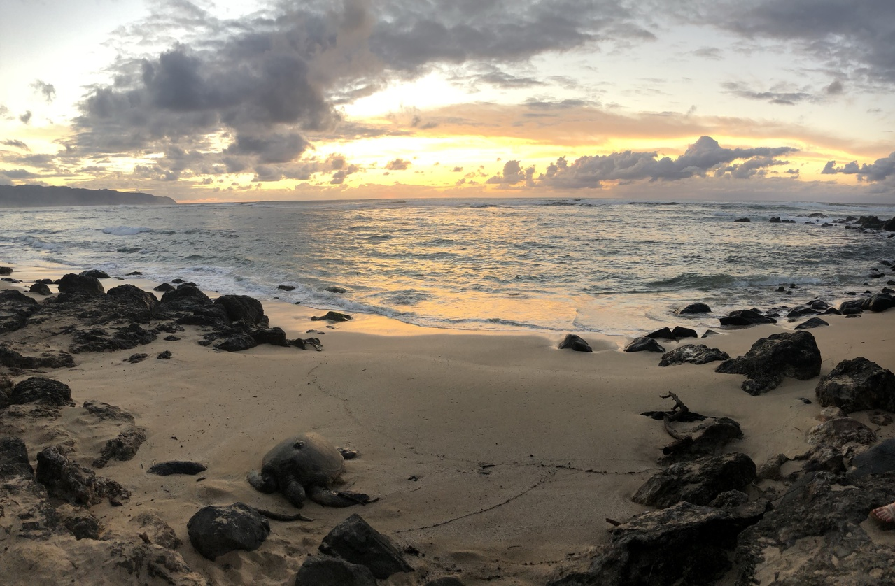 Sunset and ocean and turtle on beach.
