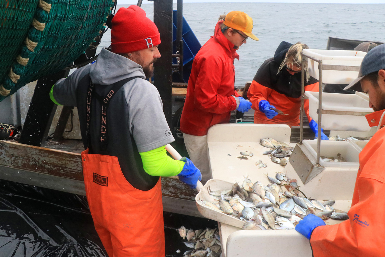 shoveling the remainder of the catch onto the sorting table