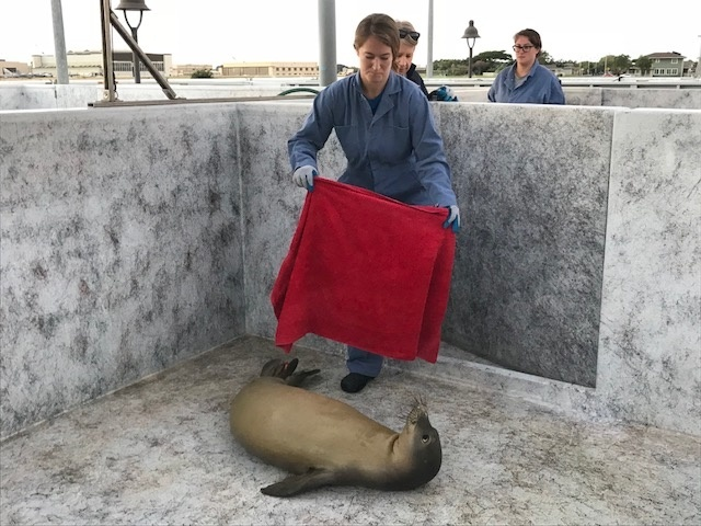 NOAA staff wearing appropriate sanitary and safety gear, entering the live animal pen with RJ16