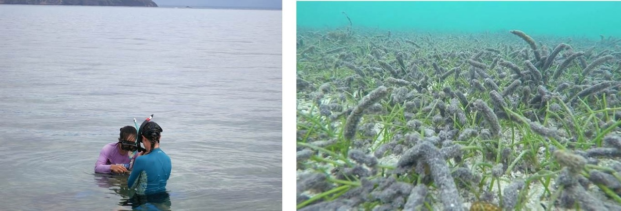 NOAA and MNRE researchers (left) consult about cyanobacteria growing on seagrass leaves (right)