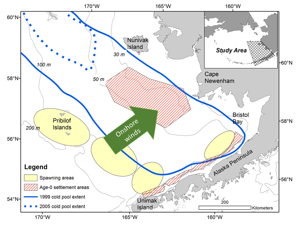 Northern rock sole spawning areas in the Bering Sea