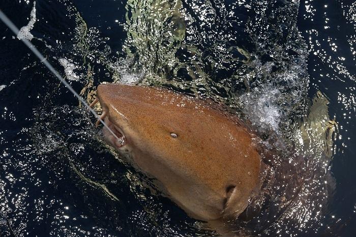 shark_cruise_42.jpg