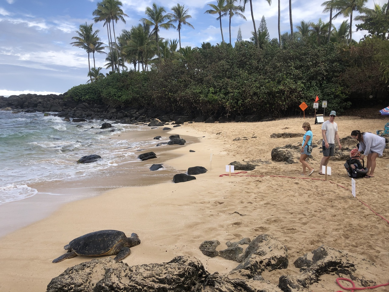Sea turtle resting on beach, people at a distance.