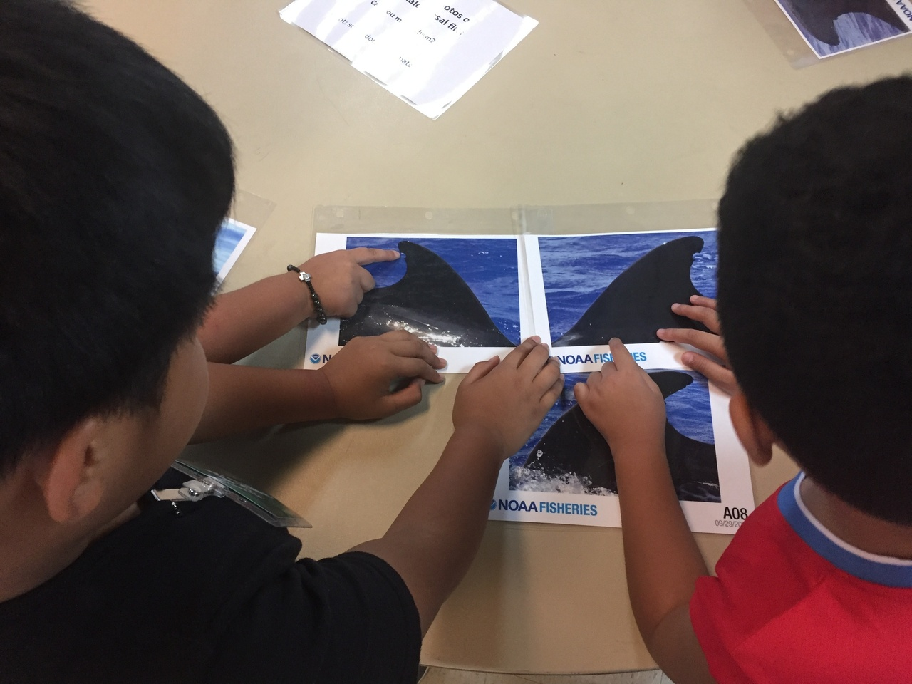 Camp Maga'lahi students learn about dorsal fin identification through the dorsal matching activity.
