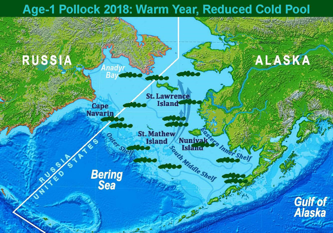 Map showing 2018 approximate age-1 pollock distribution and representation of a warm year with a reduced cold-pool.