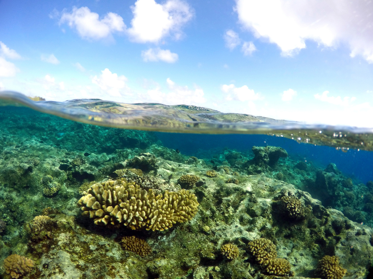 Coral reef at Wake Atoll in the Pacific Remote Islands Marine National Monument
