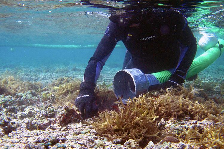 Diver with a super sucker hose.