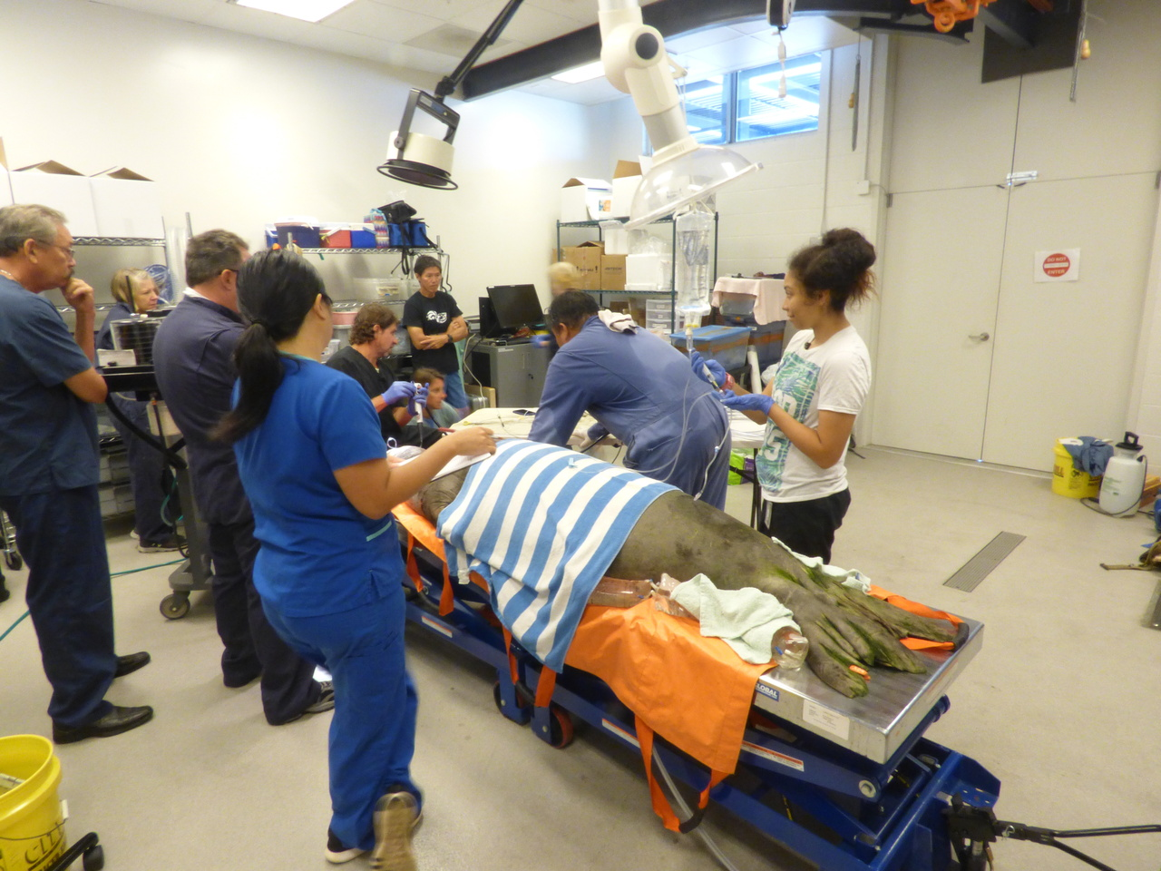 Ten people stand in vet lab around seal on exam table.