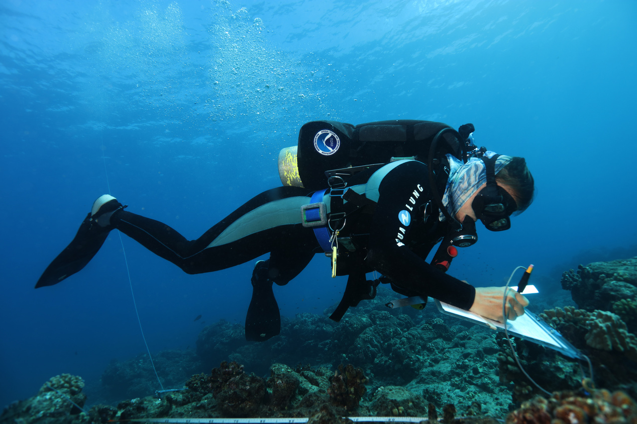 Benthic divers use underwater paper to record the size, species, and health of coral colonies. NOAA Diver Rhonda Suka demonstrates perfect bouyancy while she gets all the details down on her dive slate. <br><i>Photo: NOAA Fisheries/Raymond Boland.</i>