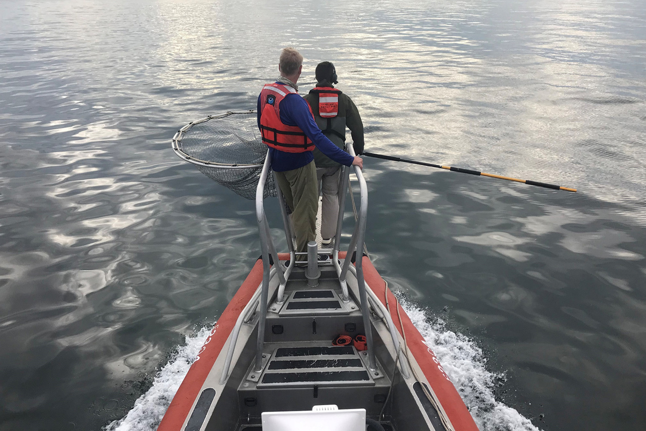 Mike Judge and Chris Sasso on boat pulpit ready for tagging