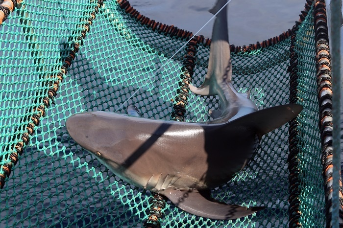 shark_cruise_25.jpg