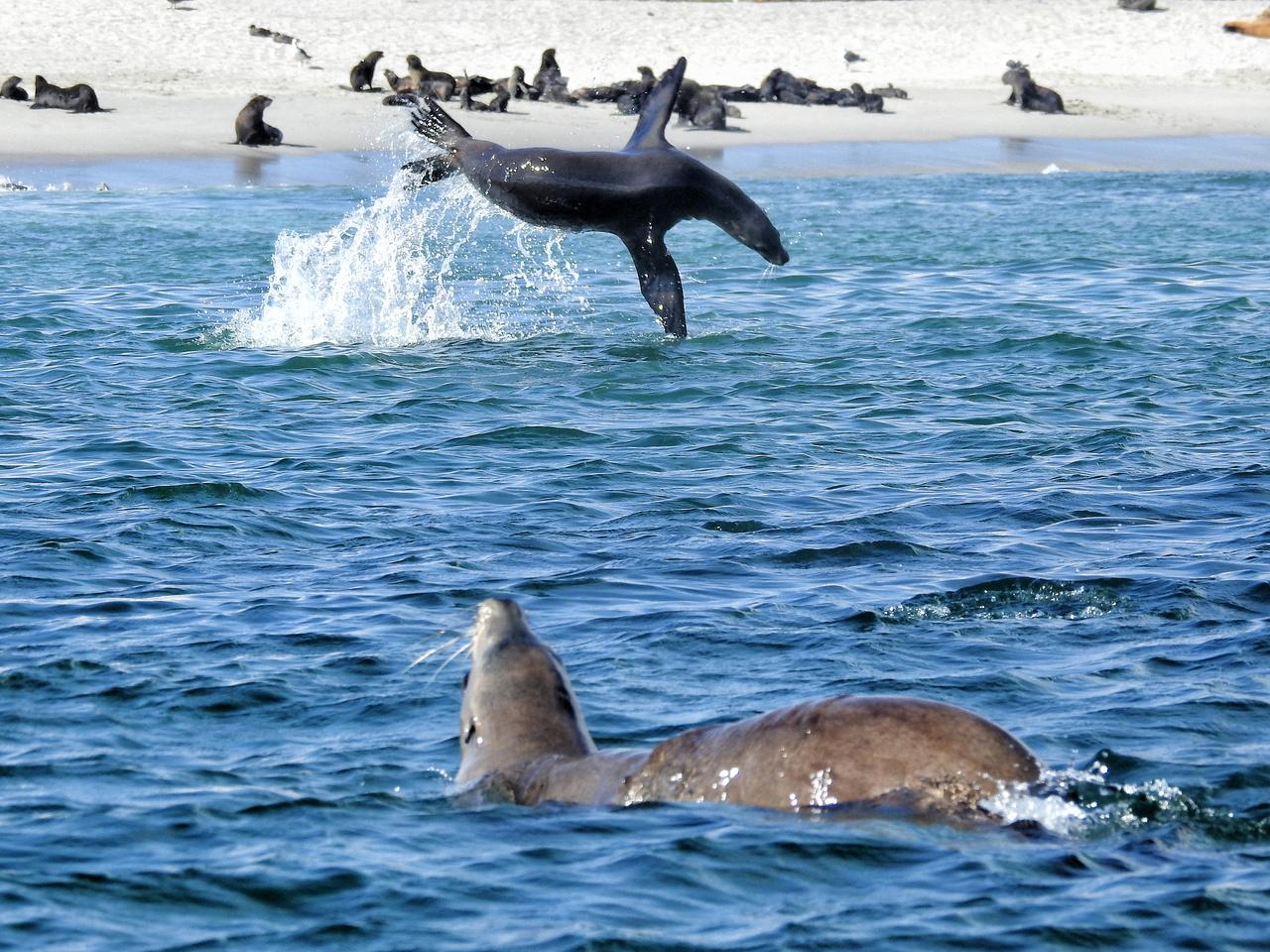 California Sea Lion Rookery, Photo credit: Jeff Harris