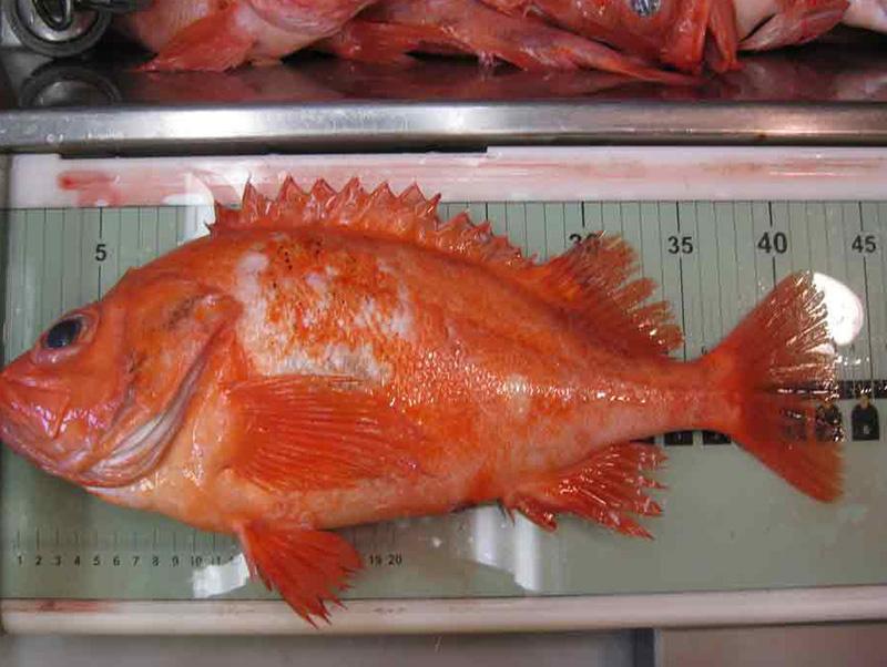 redfish3.jpg