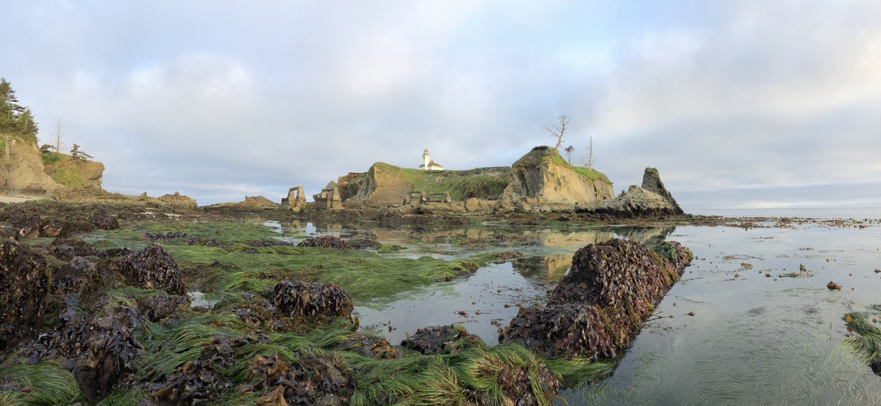 Low tide at Cape Arago Lighthouse in Charlston, Oregon.