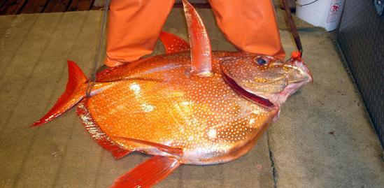 Opah fish